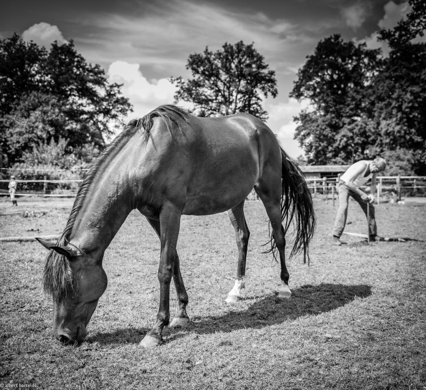Man en paard